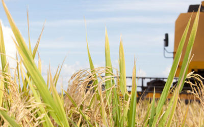 Oportunidades tributárias na agroindústria do arroz