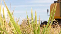O projeto de lei 181/2013 e as alterações nas operações com arroz no Estado do RS